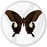 Black And Brown Butterfly Species Papilio Nephelus Round Beach Towel