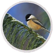Black-capped Chickadee Round Beach Towel by Tony Beck