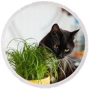 Black Cat Eating Cat Grass Round Beach Towel
