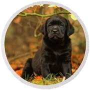 Black Labrador Retriever Puppy Round Beach Towel