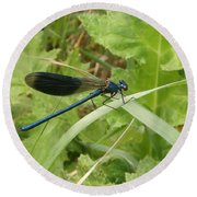 Blue Dragonfly On Leaf Round Beach Towel