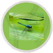 Blue Dragonfly On Lily Pad Round Beach Towel