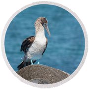 Blue-footed Booby On Rock Round Beach Towel