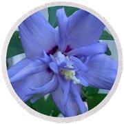 Blue Rose Of Sharon Round Beach Towel
