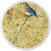 Bluebird In February Round Beach Towel