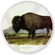 Bos Americanus, American Bison, Or Buffalo Round Beach Towel