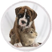 Boxer Puppy And Guinea Pig Round Beach Towel