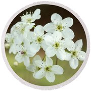Bradford Pear Flower Round Beach Towel