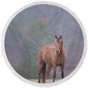 Brown Horse In Fog Round Beach Towel