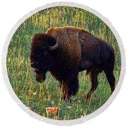 Buffalo Custer State Park Round Beach Towel