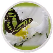 Butterfly On White Round Beach Towel