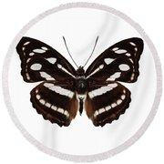 butterfly species Athyma reta moorei Round Beach Towel