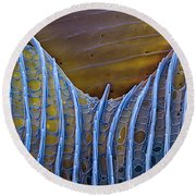 Butterfly Wing Scale Sem Round Beach Towel
