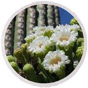 Cactus Budding Round Beach Towel