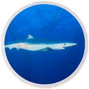 California, Blue Shark Round Beach Towel