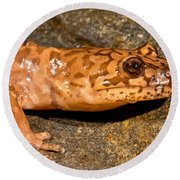 California Giant Salamander Round Beach Towel