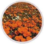 California Poppies Desert Dandelions California Round Beach Towel
