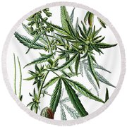 Cannabis Sativa Round Beach Towel