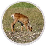 Caribou Fawn Round Beach Towel