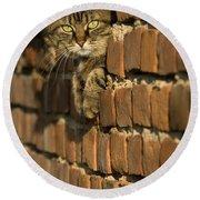 Cat On A Brick Wall Round Beach Towel