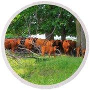 Cattle Herd Round Beach Towel
