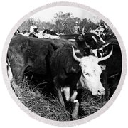 Cattle: Longhorns Round Beach Towel