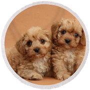 Cavapoo Pups Round Beach Towel by Mark Taylor