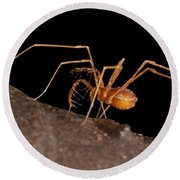 Cave Harvestman Round Beach Towel