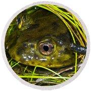 Chilean Widemouth Frog Round Beach Towel