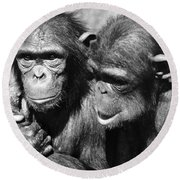 Chimpanzees Round Beach Towel