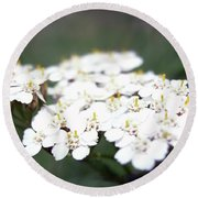 Close-ups Of A White Meadow Flower Round Beach Towel