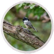Coal Tit Round Beach Towel
