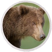 Coastal Brown Bear Round Beach Towel