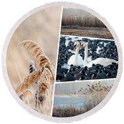 Collage Of Winter Grass Round Beach Towel