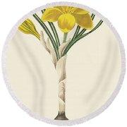 Common Yellow Crocus Round Beach Towel