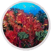 Coral Reef Scene Round Beach Towel