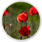 Corn Poppy Flowers Round Beach Towel by Nailia Schwarz