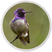 Costa's Hummingbird, Solano County California Round Beach Towel