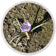 Crocus 1 Round Beach Towel