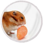 Curious Hamster 1 Round Beach Towel