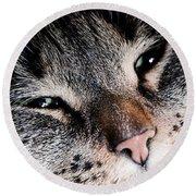 Cute Cat Close-up Portrait Round Beach Towel