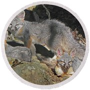 D-a0072 Fox Family On Our Mountain Round Beach Towel