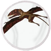 Dimorphodon On White Round Beach Towel