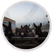 Donkeys Round Beach Towel