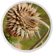 Dried Up Thistle Round Beach Towel