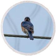 Eastern Bluebird Round Beach Towel