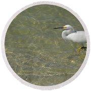 Eastern Great Egret In Florida Round Beach Towel