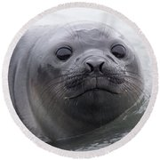 Elephant Seal Pup Round Beach Towel