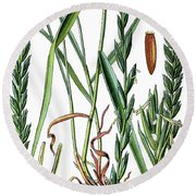 Elymus Repens, Commonly Known As Couch Grass Round Beach Towel