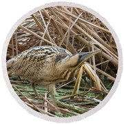 European Bittern Round Beach Towel